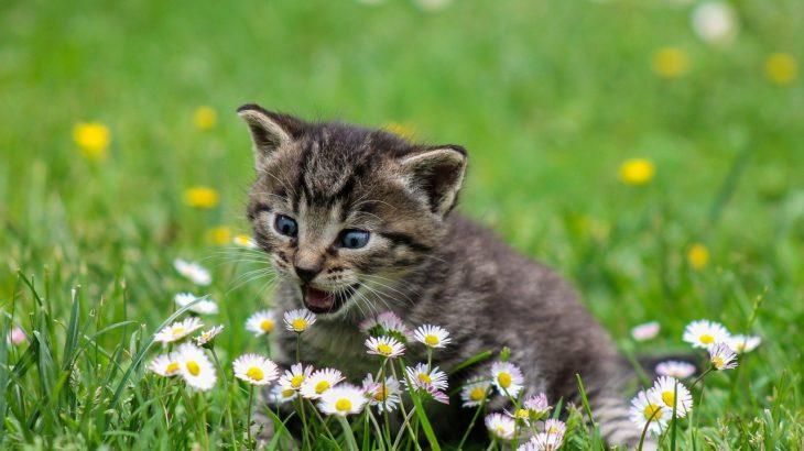 自分を動物に例えるとの例文!猫、ネズミ、フクロウ【面接・ES】