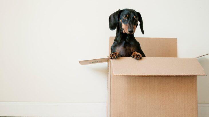 【相場より2割安い!】引っ越しの安い時期を徹底解説。相場を知る方法も紹介